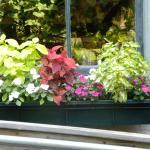 Flower box outside