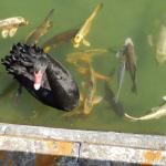 Avec les poissons