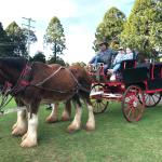 Bunya Mountains Horse Drawn Tours
