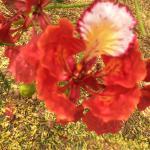 Flower Tree at Villa Lembos