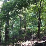 Reserva de Tigres Periyar