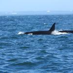 Ocean EcoVentures Whale Watching Foto