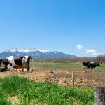 八ヶ岳がのぞめる牧場