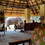 Elefants walking in the Marula Lodge