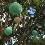 The paper lanterns in the trees at Forever Bungalows. Charming.