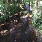 Farndale Nature Reserve