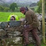 Father and son dry stone walling in the rain at Tyddyn Mawr