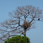 Saw an Eagle at St. Mark's Lighthouse