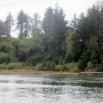 Nehalem River, Nehalem, OR