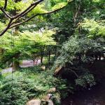 Photo de Soan Kosumosu