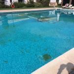 Mousse verdâtre dans la piscine