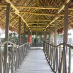 Walkway to Hammock Room at Tahuayo Lodge