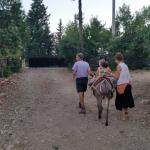 Donkey ride after dinner