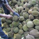 Mountain of durians