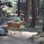Deer along the trail