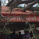 prachi tree