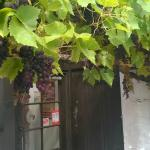 The grapes glistening in the September sun