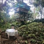 Photo of Tropical Treehouse