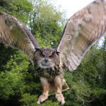Dingle in Flight