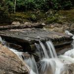 Chapman Creek Hatchery and Nature Destination