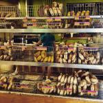 Bagels galore! Bagel display and egg bagel turkey sandwich 😍