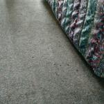 Carpet grossly dirty and burn holes