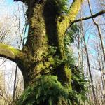 moss & ferns frequent trees in the park
