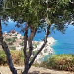 Stunning views through the olive trees.