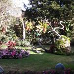 a view of our garden