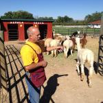 Mike and his alpacas