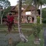 Melati Cottages Foto