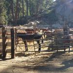Horses in corral getting ready for the days ride