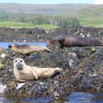 Seals at Dunvegan Castle