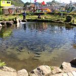 Kikuchikeikoku Mizunoeki (Fishing-pond)
