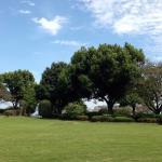 園内の芝生