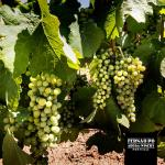Fernão Pó Winery