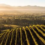 The view of Napa Valley