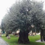 Photo de Museo dell'Olivo