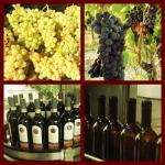 harvest&bottling
