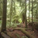 Cathedral Grove, recommended by B&B