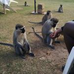 Monkeys in the courtyard