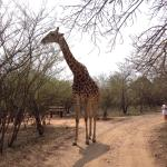 Photo de La Kruger Lifestyle Lodge