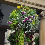 De magnifiques bouquets partout dans le centre ville
