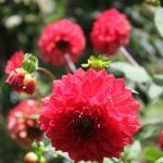 Flowers @ Finca Neblina del Bosque in the Miraflor Reserve