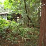 Photo of Muir Woods Trading Co