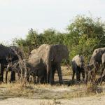 Слонов в этом Национальном парке больше всего.