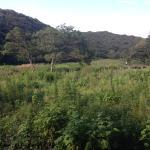 Koajiro Forest