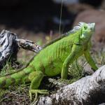 Grenadian by Rex Resorts Foto