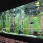 Cheddar's aquarium