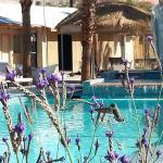 Anahata Springs Spa Retreat Hummingbirds on Lavendar